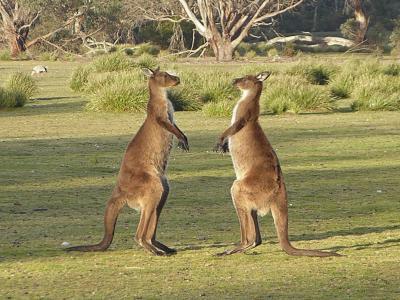 Australien_2016_Tag_32_250-1_red.jpg