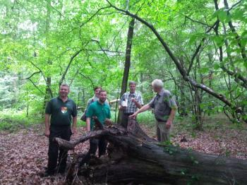 Das Foto zeigt von links: Forstwirt Thomas Helmschrott, Kämmerin Andrea Pfrang, Bürgermeister Stefan Rottmann, Abteilungsleiter Stephan Thierfelder und Revierförster Rainer Seufert.