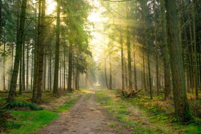 forest-2209226_1920.jpg