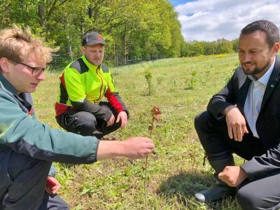Förster Felix Rabe und Forstwirt Jonas Amend mit Bürgermeister Sebastian Hauck beim Vor-Ort-Termin im Waldstück Gollgarten