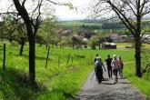 Weinpanorama Steigerwald - Siggi Ständecke (2).JPG